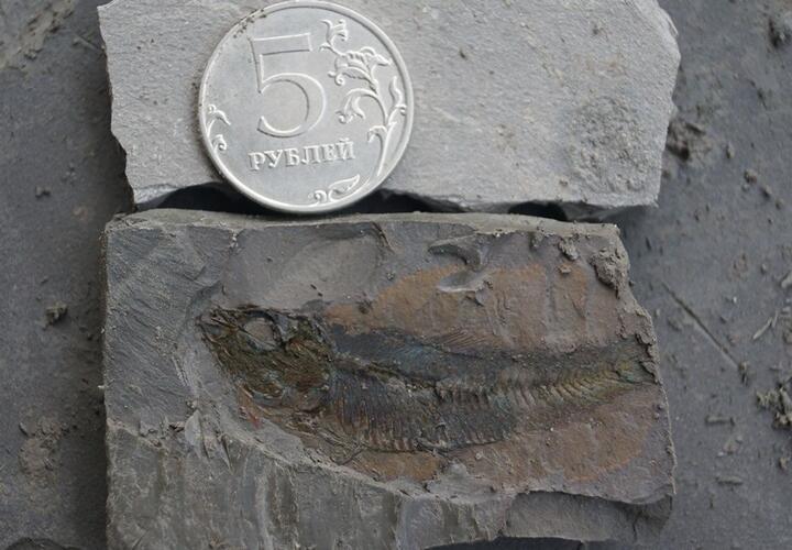 Ученые обнаружили на Кубани останки древних рыб