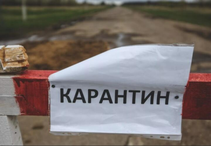 На Кубани введен карантин в одном из районов, а в Геленджике бродячие собаки захватили детскую площадку: ТОП-5 за 7 января