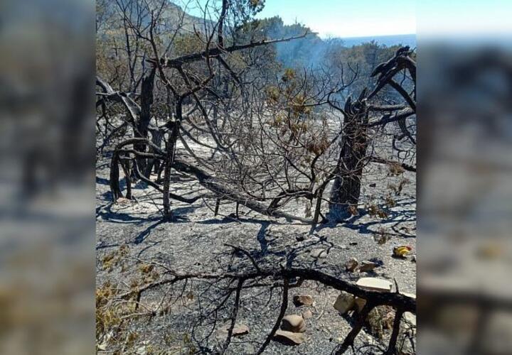 Ущерб от пожара на Утрише составил 600 миллионов рублей