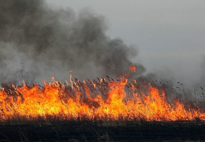 В Анапе горят плавни камыша (ВИДЕО)