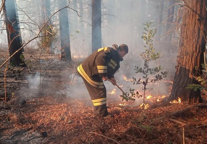В Краснодарском крае растет площадь лесных пожаров