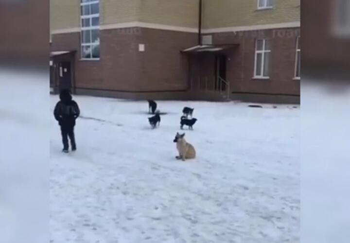В Новороссийске стая собак накинулась на ребенка