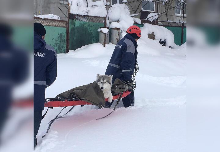 В Краснодарском крае спасатели помогли псу со сломанной лапой