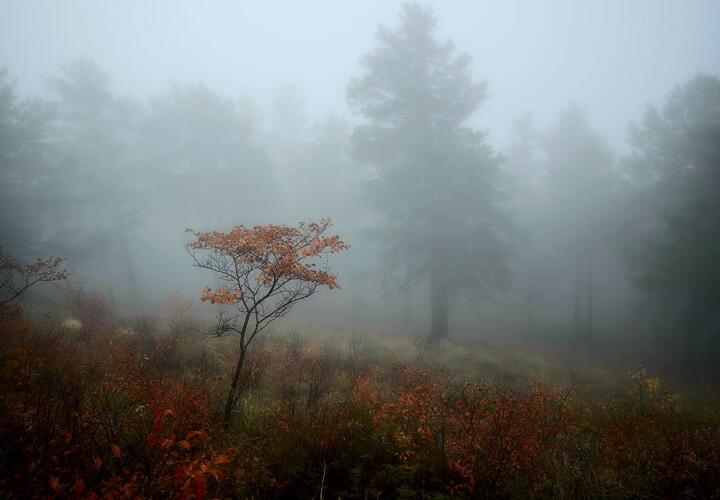 Краснодарский край накроет туман