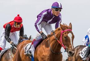 Лошади конного завода «Восход» снова в призерах
