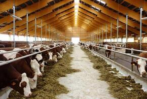 Сельхозкомпания на Кубани выплатит штраф в 20 миллионов рублей