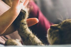 Создано мобильное приложение, которое переводит «кошачий язык» на человеческий