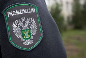 В Краснодарском крае задержано более тонны немаркированной курятины