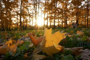 В последний день осени на Кубани будет тепло и немного ветрено