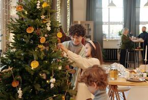 Как правильно выбрать к празднику живую елку