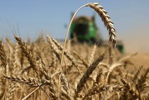 Кубань «упала» в валовом сборе и в урожайности