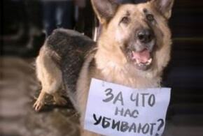 Мэрию Геленджика призывают к ответу из-за массового убийства собак