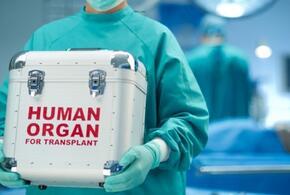В Адыгее заблокировали cайты по продаже человеческих органов