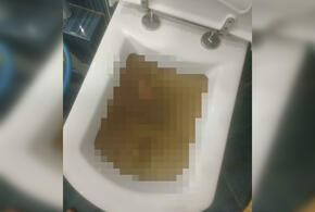 В Краснодаре в многоквартирном доме прорвало канализацию