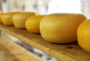 В Краснодаре выявлено 650 килограммов опасного сыра