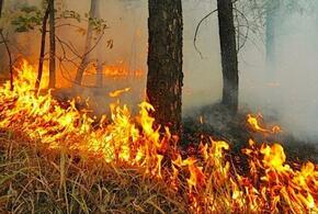 В Краснодарском крае пожар уничтожил 10 га леса