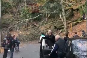 В Сочи на проезжую часть рухнуло дерево