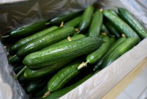 В Туапсе задержали крупную партию турецких овощей