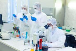 «Британский» штамм коронавируса добрался до России