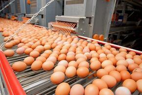 Минсельхоз объяснил причину подорожания яиц