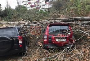 На парковке в Сочи рухнувшее дерево повредило автомобили