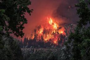 Найдены поджигатели леса в Сочи