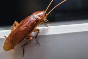 Назван самый эффективный способ борьбы с тараканами