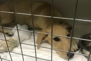 В Краснодаре осудили живодера, избившего собаку