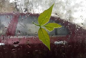 На Кубань возвращаются дожди