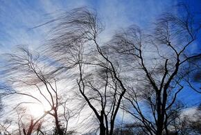 В Краснодарском крае сегодня будет дуть сильный ветер