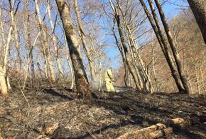 В Сочи два из трех лесных пожаров ликвидированы