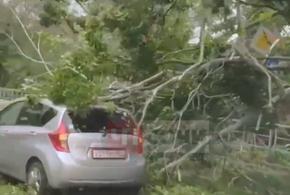 В Сочи на легковушку упало дерево