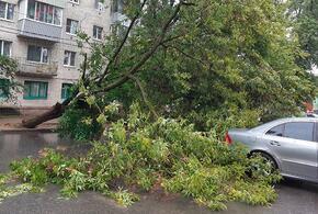В Сочи на жилой дом рухнуло 40-метрое дерево