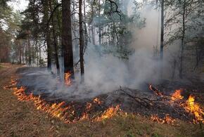 В Сочи не утихают лесные пожары