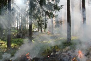В Сочи продолжают действовать три природных пожара
