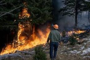 В Сочи продолжают гореть леса