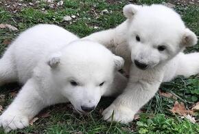 Белым медвежатам из Геленджика хотят дать необычные клички