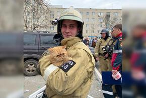 Каждая жизнь дорога: в Армавире из пожара спасли рыжего кота