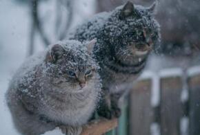На Краснодар в выходные обрушатся дождь с мокрым снегом