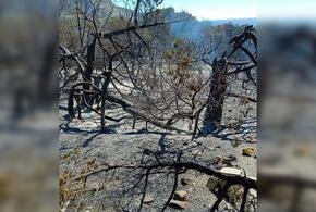 Назван ущерб от пожара в заповеднике «Утриш»