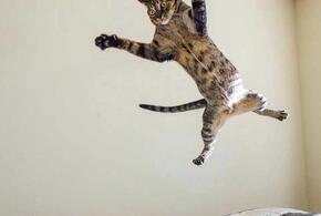 Нежданчик: в магазине на посетителей с потолка свалился кот (ВИДЕО)