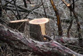 Пять лет строгого режима получили «черные лесорубы»