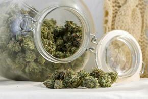 У жителя Краснодарского края нашли полкилограмма марихуаны