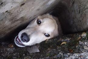 В Краснодарском крае пса от неминуемой гибели спасли сотрудники «Кубань-СПАС»