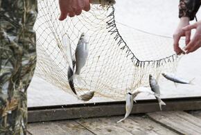 В Краснодарском крае у браконьеров изъяли рыбу на 3,5 миллиона рублей