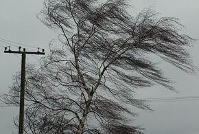 В первый день февраля на Кубани будет тепло и ветрено