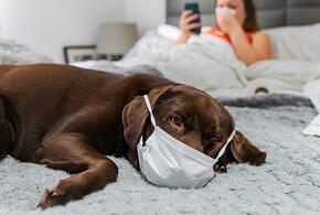 В России вакцина от коронавируса для животных появится весной