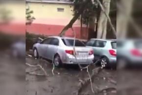 В Сочи пострадали несколько автомобилей из-за упавшего дерева (ВИДЕО)