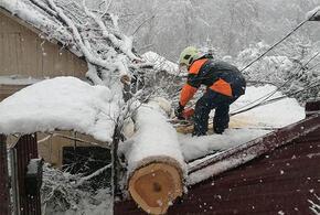 В Сочи рухнувшее дерево проломило крышу дома
