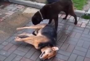 Догхантеры устроили массову травлю собак в Сочи (ВИДЕО)